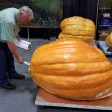How we move and inspect a large pumpkin at the 2017 Indiana State Fair